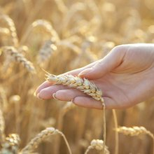 How to learn to live without wheat | Holland & Barrett