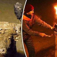 'It's BARBARITY!' Toro Jubilo festival revellers set bull's horns ON FIRE in sick custom