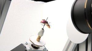 Video: Digitizing Natural History