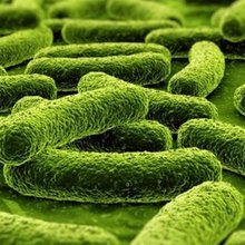 Food emulsifiers linked to gut bacteria changes and obesity