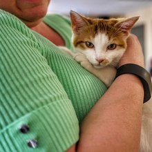 How Animal Welfare And Cat Cafes Go Hand-in-Hand