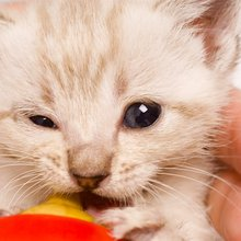 Bottle-Baby Kittens: From Fosters to Forever Homes
