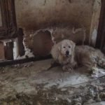Tri-County Animal Rescue Assist 87 Cats and Dogs in Hoarder House Rescue Operation
