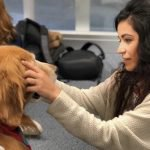 Kol the Therapy Dog Warms Local Hearts and Wins Medals