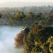 Coastal Los Angeles losing fog to urban sprawl