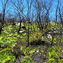 Sam's Point ecosystem begins slow recovery after wildfire
