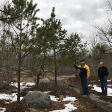 Oswegatchie Hills are home to disappearing Pitch Pines