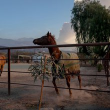 Ojai, flames, horses - and a cowboy who rides in to the rescue