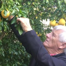 Marietta man claims discovery of new fruit