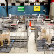Tully's Kennels petition shows how social media makes activism easy - but a spark can become a vi...