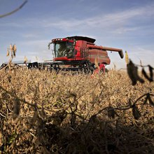 Farms face steep slide: Net profits this year expected to be half of what they were in 2013