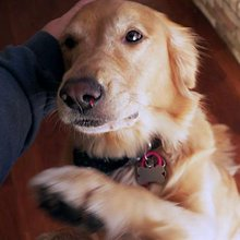 Does Your Dog Prefer You Over Anyone Else? It's Complicated.