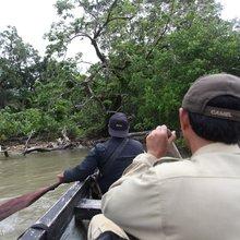 Can the Javan rhino be saved before disaster strikes?