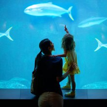 5 Ways to Up the Fun Factor at Museums, Zoos, and Aquariums