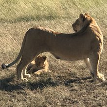 Kenya offers extraordinary safari experience for all tastes