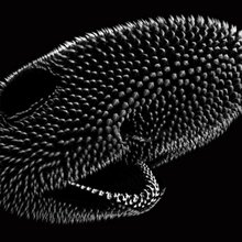 Ancient Turing Pattern Builds Feathers, Hair - and Now, Shark Skin | Quanta Magazine