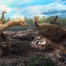 Ancient Mongolian nests show that dinosaurs protected their eggs