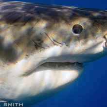 Protecting Sharks and Marine Ecosystems - Mission Blue
