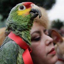 Ilan Greenberg - Parrots and humans