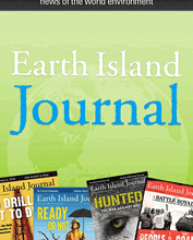 For Bison and Tribes Alike, a Homecoming - Earth Island Journal