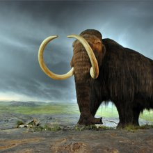 We have the ability to 'de-extinct' animals. Should we?