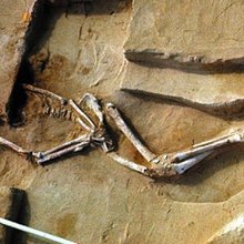 The Bones That Forever Changed Australia's History