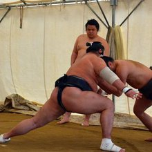 The life of a sumo wrestler