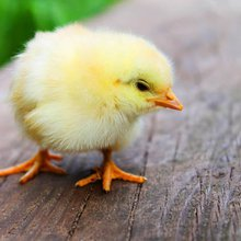 When You Want to Chicken Out, Use These 6 Motivating Quotes to Push Forward