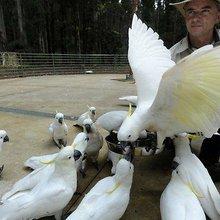 Cockatoo feeders face fines