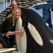SeaWorld Puts Its Whales On Valium-Like Drug, Documents Show