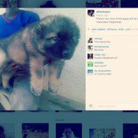 Instagram is unwittingly becoming a puppy mill advertiser | Digital Trends