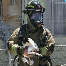 Casa Grande firefighters rescue pets from blaze