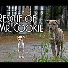 Rescue of Frightened Injured Dog Named Mr Cookie by Alex Pacheco of 600 Million org