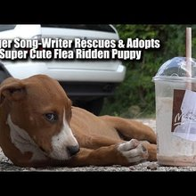 Singer Song-Writer Rescues Flea Ridden Cute Stray Puppy Filming Music Video About Strays in Houst...