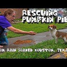 Rescue of 5 Month Old Puppy From Rain Soaked Houston, Texas - Please Share Pumpkin Pie's Story!