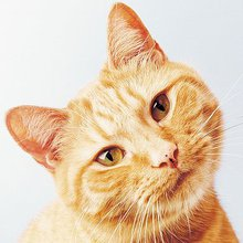Domestic cats can recognise their own names when called