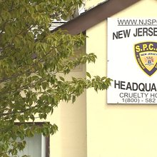 Kane In Your Corner: NJSPCA law enforcement practices questioned