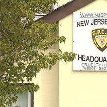 Watchdog group: NJSPCA agency run by 'wannabe cops'