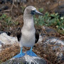The Road Less: John Huston, Blue-Footed Boobies and Me by Tom Molanphy