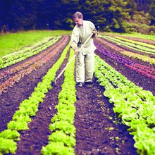 Cultivating Awareness: Farming Is Daily Meditation at Green Gulch