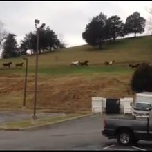 Herd of horses escapes, leads police on chase through Pigeon Forge