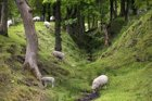 Antonine Wall gets makeover to put it on the tourist trail | The Times