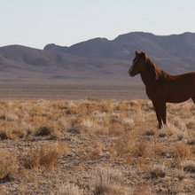 All the Missing Horses: What Happened to the Wild Horses Tom Davis Bought From the Gov't?