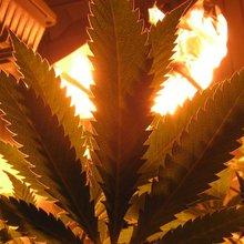 Denver Post Marijuana Editor Ready to Report on Reefer Madness