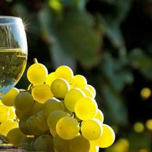 The Moscato Wine Guide