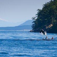 On the Trail of Whales | Hakai Magazine