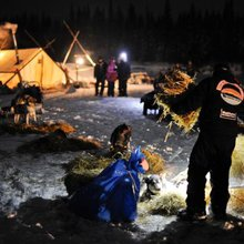 Iditarod Live: The Sled Blog : 'Mushing Mortician' gives mouth-to-snout CPR after dog collapses |...