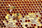 Pesticides and Bees: It's Complicated