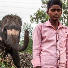 Delhi's Elephants Are Being Driven From the City