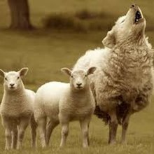 Is Your Advisor A Wolf Of Wall Street Or A Sheep?